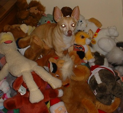 You do not want to know what Blondie does with these stuffed animals...